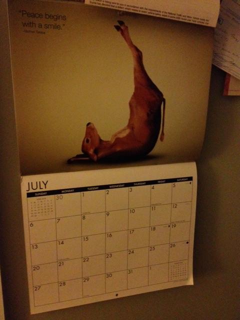 cow calendar