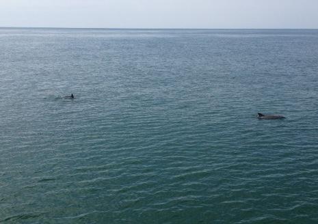 CM dolphins