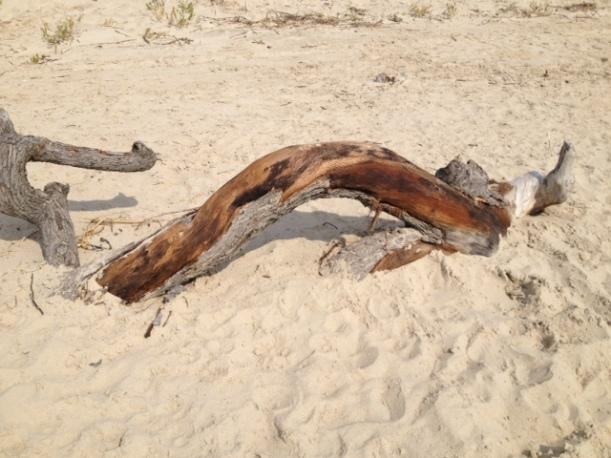 CM driftwood