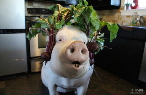 beets by esther