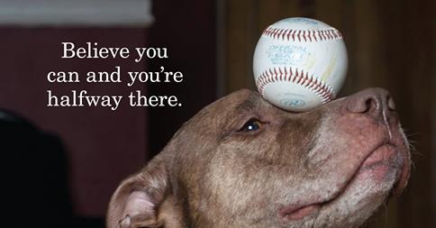 scout baseball