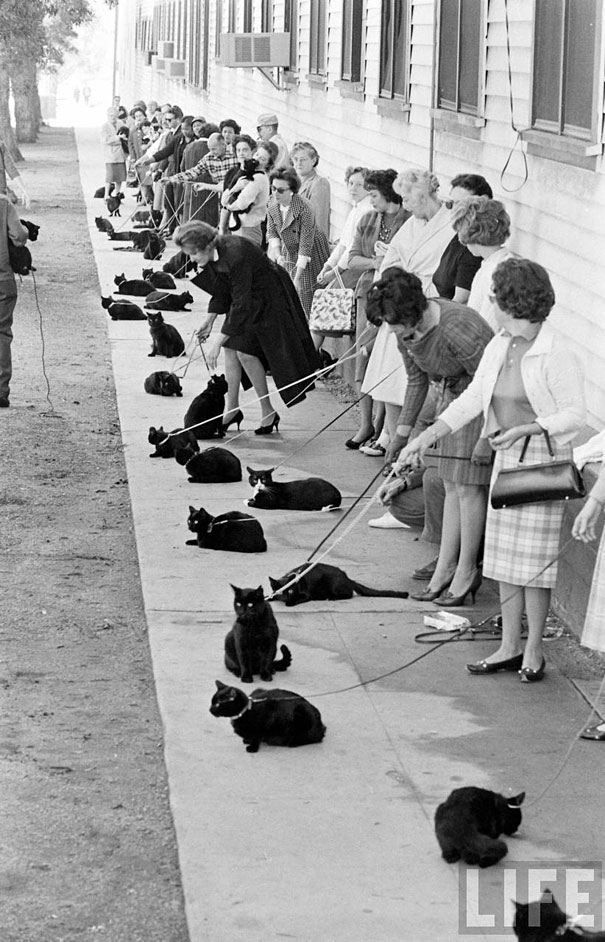 black cat auditions