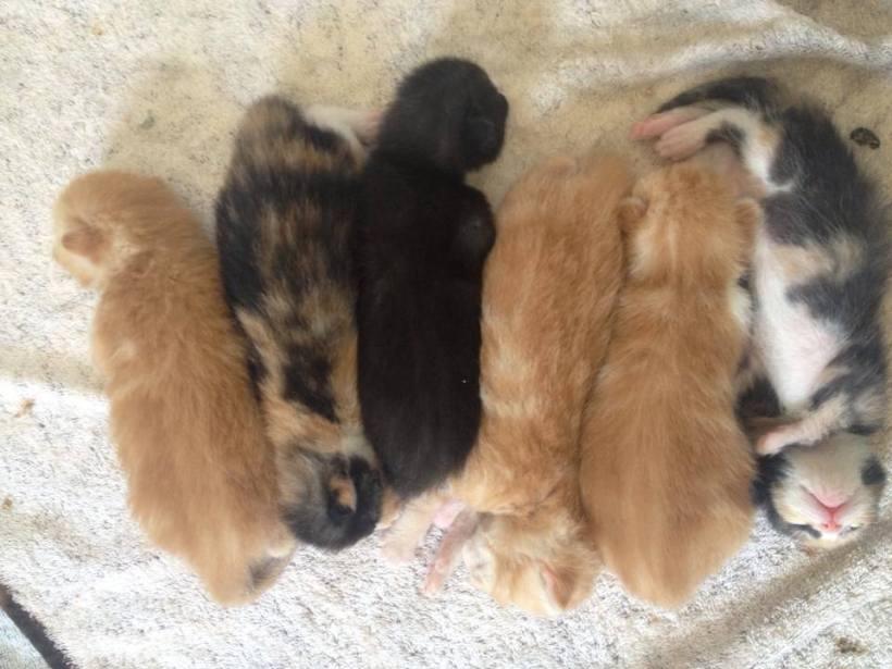kittens 22