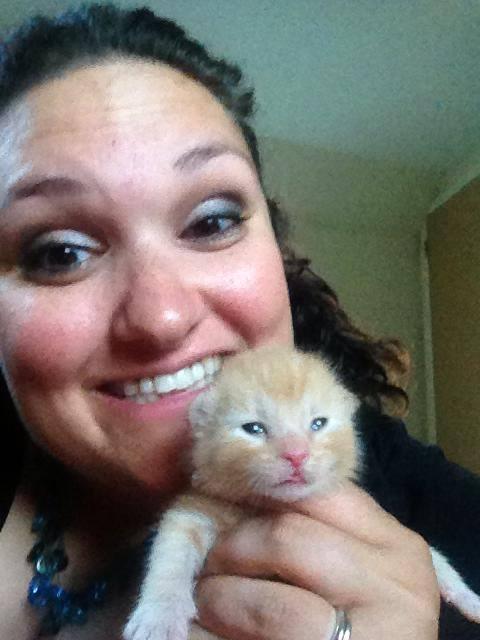 kittens 25