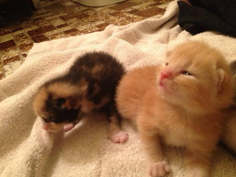 kittens 26