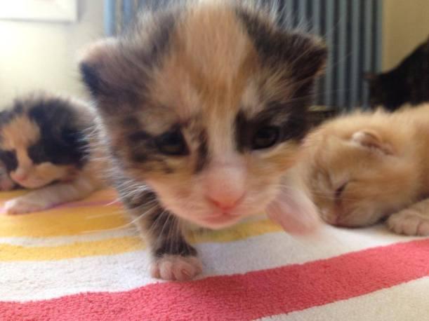 kittens 28